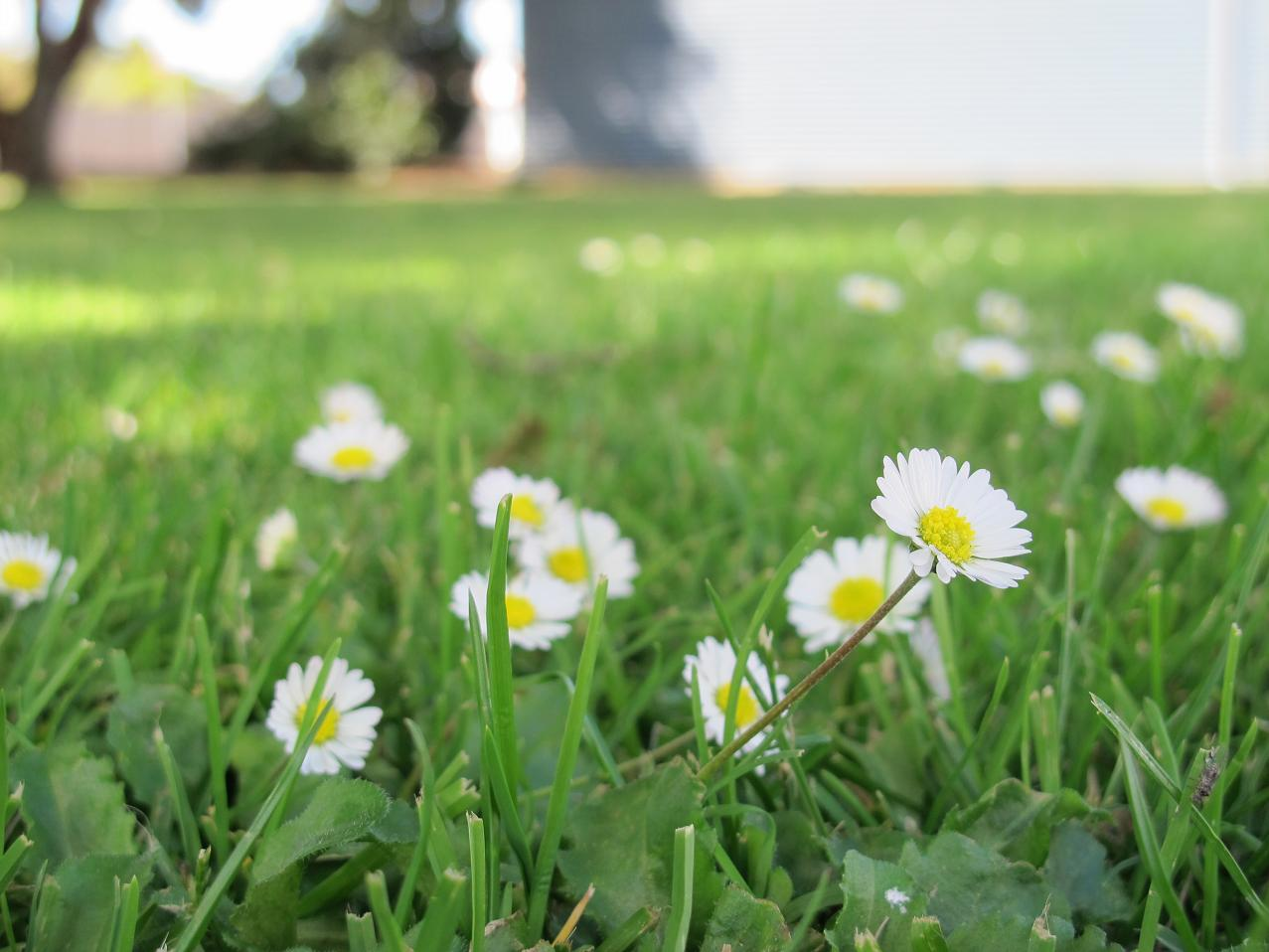 Pretty Little Flowers In The Park At Cressy Sew Busy Lizzy
