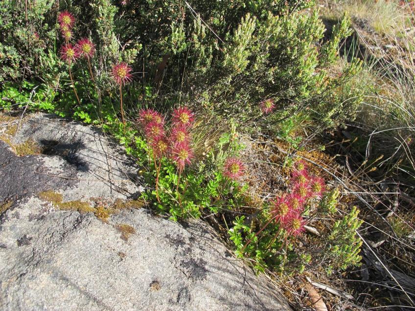 Little Australian bush flowers