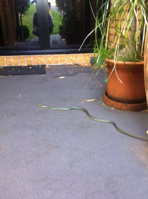 Snake! Tree snake - not poisonous but scared me!!