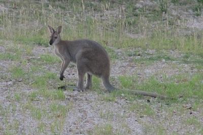 Cute Aussie critters