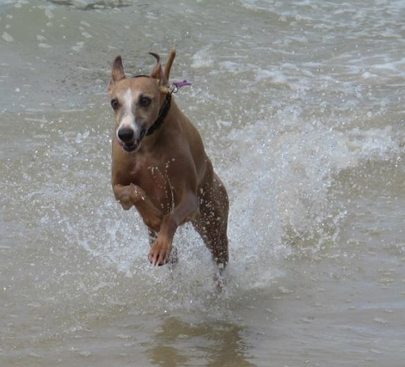 Banjo - my favourite water rat.
